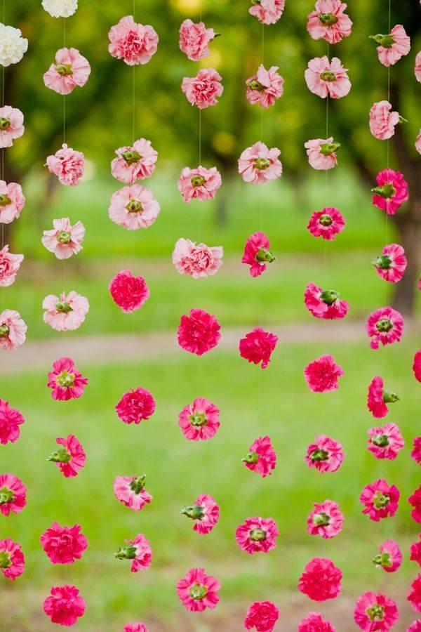Hanging Carnation flowers