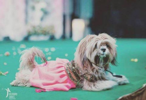 pets_bride-essentials_1