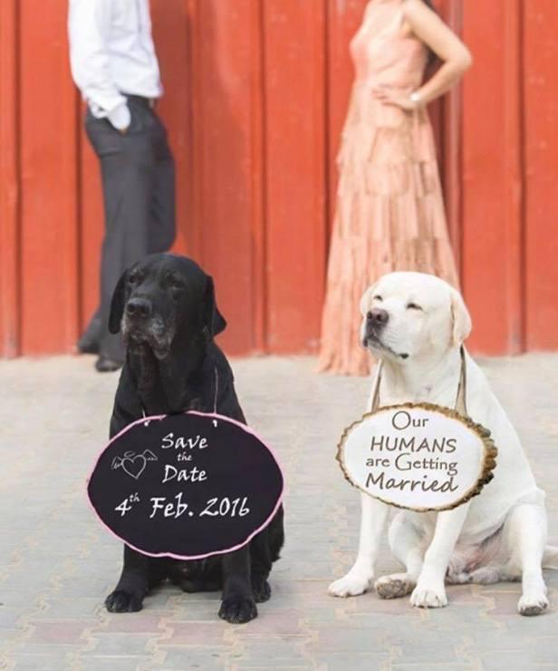 pets_bride-essentials_6